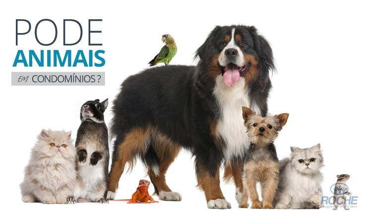 É permitido animais em condomínio?