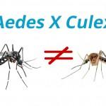 Saiba a diferença entre o mosquito comum (Culex) e o mosquito da Dengue (Aedes Aegypti)