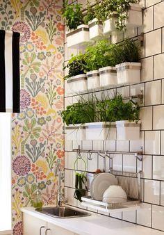 plantar ervas medicinais em apartamentos