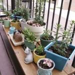 Plantas medicinais na horta do apartamento