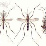 Dengue em condomínios