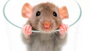Como evitar ratos em condomínios
