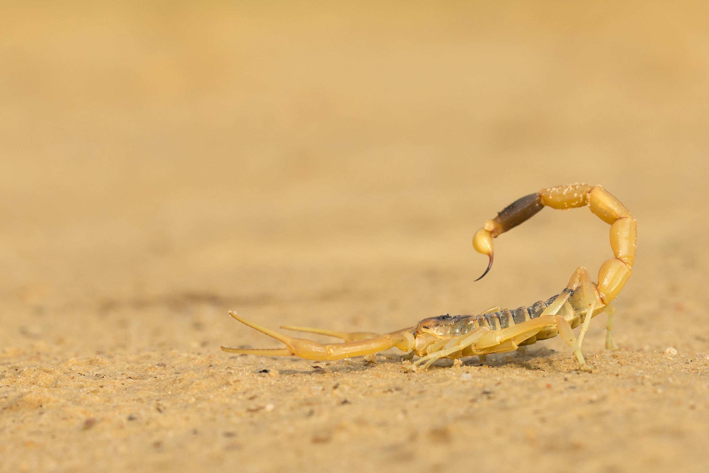 Escorpiões em condomínios: como evitar e como agir